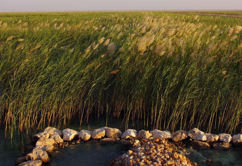 Wetland Project in Oman achieves major milestone
