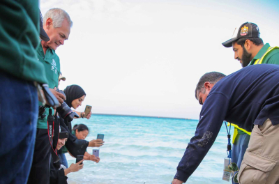 ENEC Releases `Tasamoh` a Rehabilitated Green Turtle  and organizes Beach Cleanup at Barakah Nuclear Energy Plant