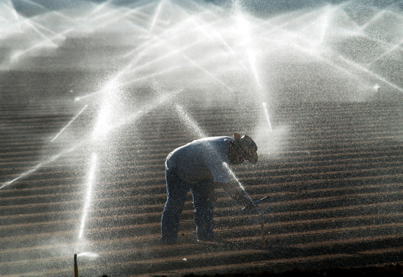 The UAE aims to reduce its use of groundwater for agriculture. (GETTY)
